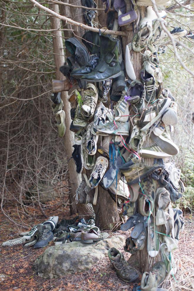 Khu rừng bí ẩn ở Canada: Hàng trăm đôi sneakers bị đóng đinh lên cây, không ai biết lý do vì sao - Ảnh 27.