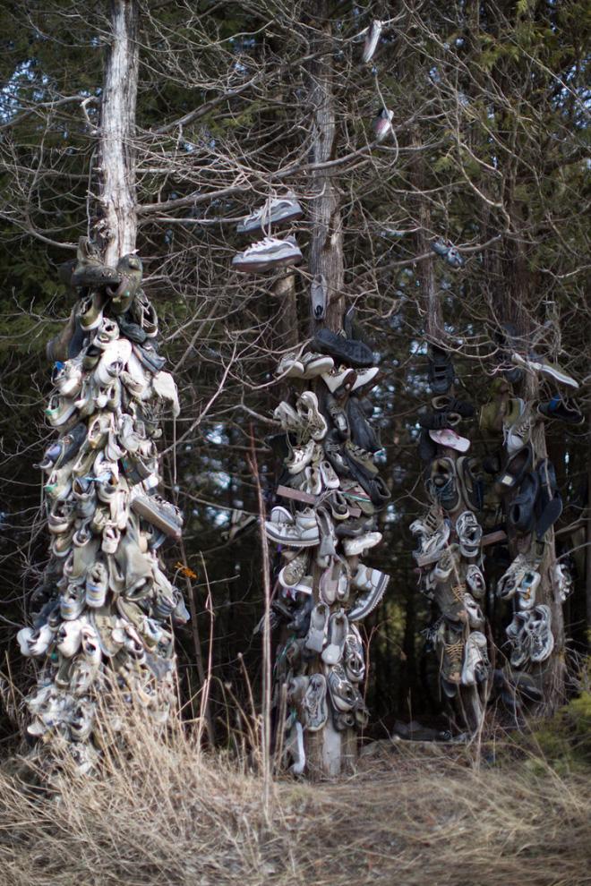 Khu rừng bí ẩn ở Canada: Hàng trăm đôi sneakers bị đóng đinh lên cây, không ai biết lý do vì sao - Ảnh 26.
