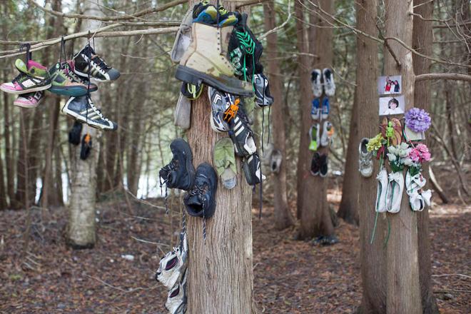 Khu rừng bí ẩn ở Canada: Hàng trăm đôi sneakers bị đóng đinh lên cây, không ai biết lý do vì sao - Ảnh 3.