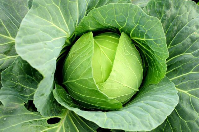 Có những loại rau củ chứa ít calo nhưng mang đến cho bạn nhiều dinh dưỡng tuyệt vời - Ảnh 6.