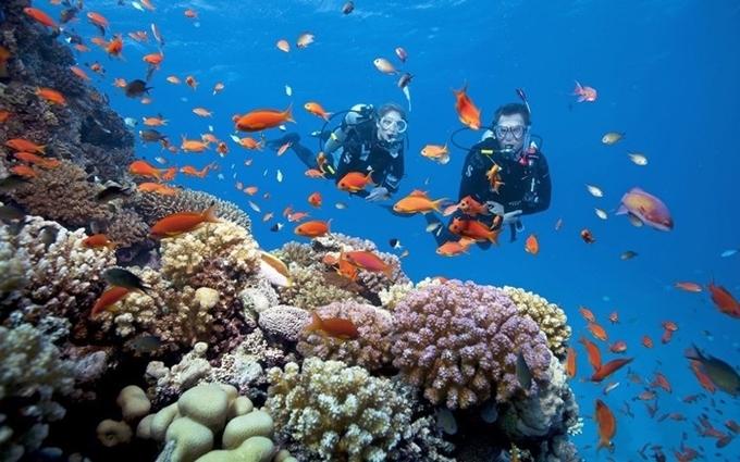 Những kiểu lặn đang hot ở Nha Trang vào mùa hè - 2