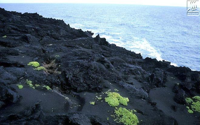 Đảo núi lửa Surtsey: Cấm địa kỳ bí của giới khoa học ngoài khơi Iceland, đến năm 1963 mới được phát hiện - Ảnh 10.