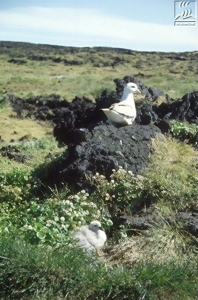 Đảo núi lửa Surtsey: Cấm địa kỳ bí của giới khoa học ngoài khơi Iceland, đến năm 1963 mới được phát hiện - Ảnh 12.