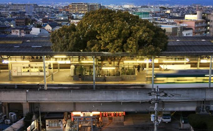 Trạm tàu điện ở Nhật né cây 700 tuổi