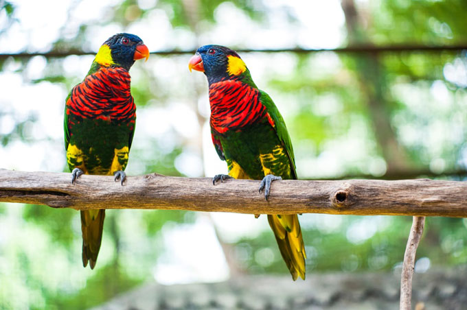 Vườn chim Kuala Lumpur: Giữa trung tâm thành phố Kuala Lumpur hiện đại, nếu muốn tìm đến thiên nhiên trong lành, bạn có thể tới thăm vườn chim Kuala Lumpur  Kuala Lumpur Bird Park nằm trong khu vườn hồ Lake Garden. Trải rộng trên vùng thung lũng xanh mướt rộng 8,5 hecta, KL Bird Park là nơi ở của hơn 3.000 con chim thuộc hơn 200 loài khác nhau, được chia thành các khu vực gồm khu bay tự do, công viên chim mỏ sừng và khu vực dành cho các loài chim sống tách riêng cùng các loài biết bay khác.