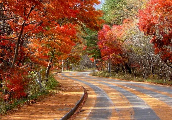Bức tranh mùa thu ở con đường nguy hiểm bậc nhất Nhật Bản - 6