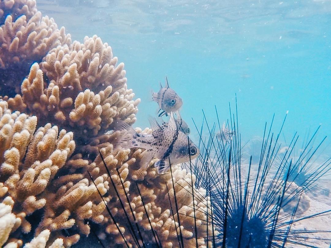 Chiêm ngưỡng thế giới trong lòng đại dương - Ảnh: @haonguyn