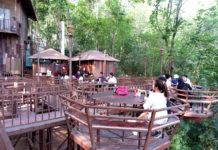 Tiệm cà phê trên cây đa hơn 200 tuổi ở Chiang Mai
