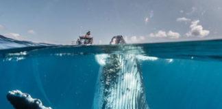 30 khoảnh khắc đẹp đến nghẹt thở từ vòng chung kết Cuộc thi ảnh Du lịch Địa lý Quốc gia 2019 - Ảnh 1.