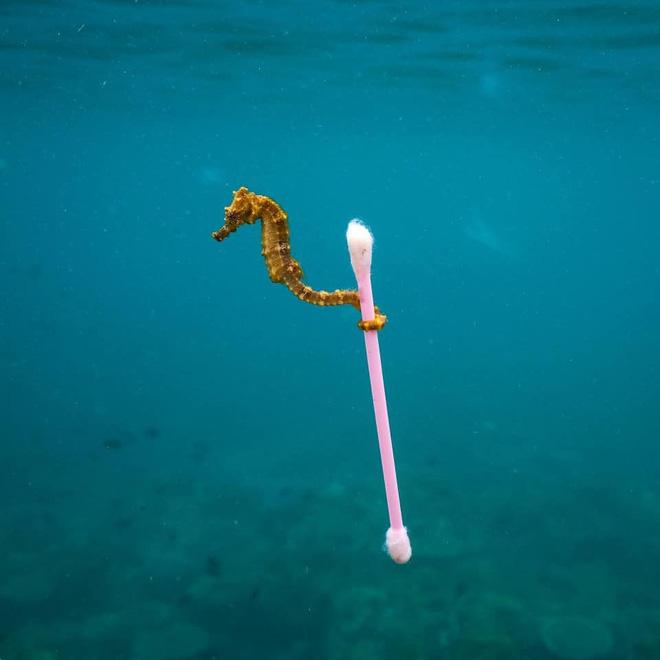 Những hình ảnh gây sốc về hậu quả của rác thải nhựa, ô nhiễm môi trường với thế giới tự nhiên - Ảnh 11.