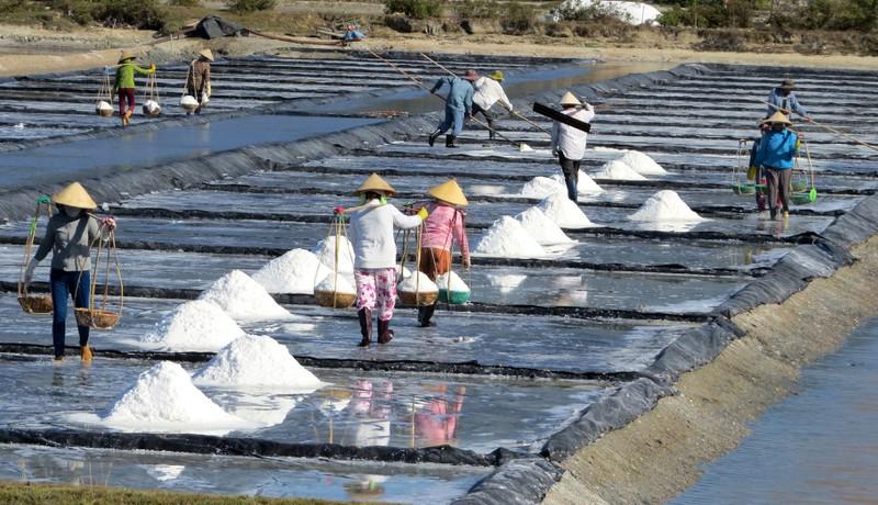Cảnh đẹp nao lòng ở cánh đồng muối Ninh Diêm, Khánh Hòa - ảnh 1